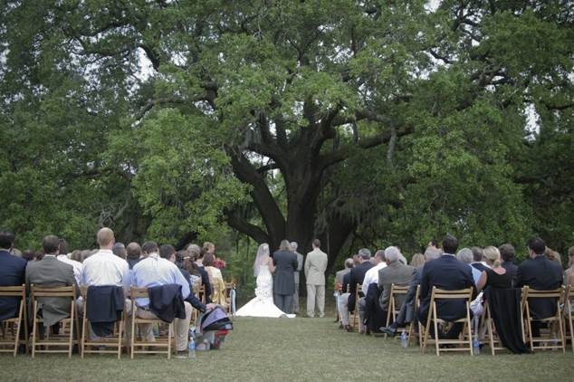 bttues_Wedding Dreams At Bigelow Tea's Charleston Tea Plantation!
